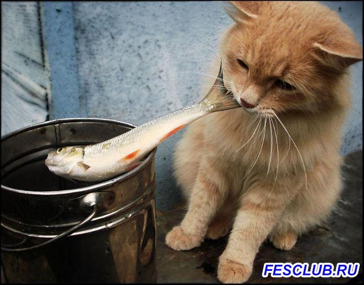 Все о рыбалке - сырая.jpg