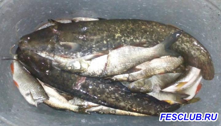 Все о рыбалке - IMAG20180916.png